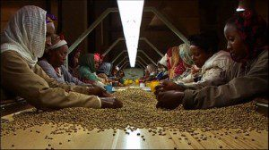 Ethiopia export earnings up 64 pct in Q1 2010/11