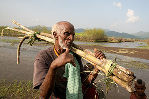 ETHIOPIA: Floods pose new threat to food security