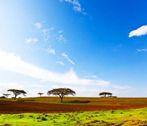 Ethiopia Electric Power Developing 300 MW Of New Solar Projects
