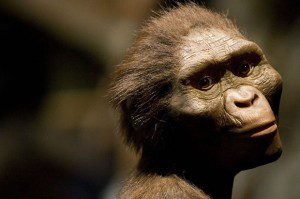 """Famed """"Lucy"""" Fossils Discovered in Ethiopia, 40 Years Ago"""