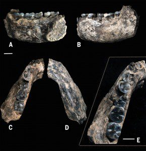Student finds 2.8 million-year-old human jawbone in Ethiopia