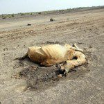In Ethiopia This is No Ordinary Year, The Drought is a 'Code Red' – Tadias Magazine