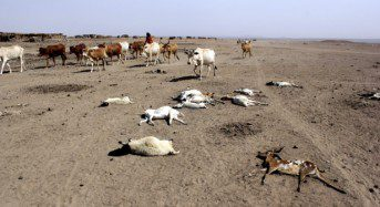 How bad is the drought in Ethiopia?