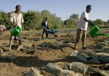 Timely seed distributions in Ethiopia boost crop yields, strengthen communities' resilience – Reliefweb
