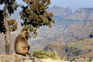 Unrest in Ethiopia hits tourism | Travel | The Guardian – The Guardian