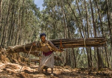 The people of Ethiopia's forests – Mongabay.com