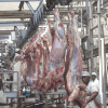 Ethiopia: $75m Abattoir Set to Be Operational Next Month – AllAfrica.com