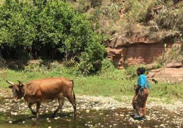 Land restoration in Ethiopia: 'This place was abandoned … This is incredible to me'