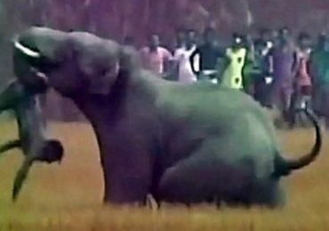 Elephant Kills Spanish Tourist in Ethiopia