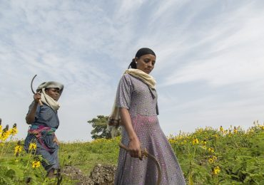Community pulls water-thirsty invasive weeds from Ethiopia's Lake Tana : Conservation news