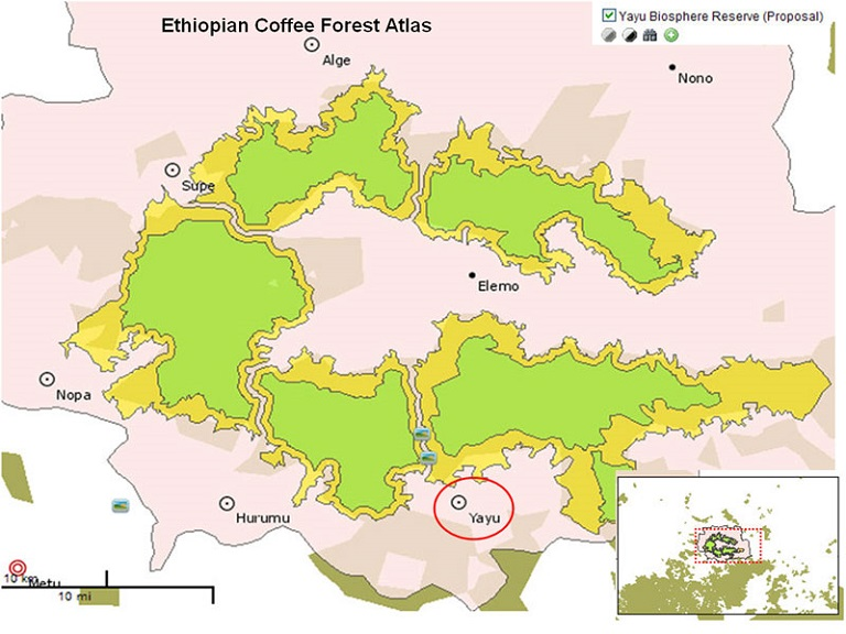 This UNESCO coffee forest atlas shows Yayu Coffee Forest Biosphere Reserve in the south. Map via UNESCO