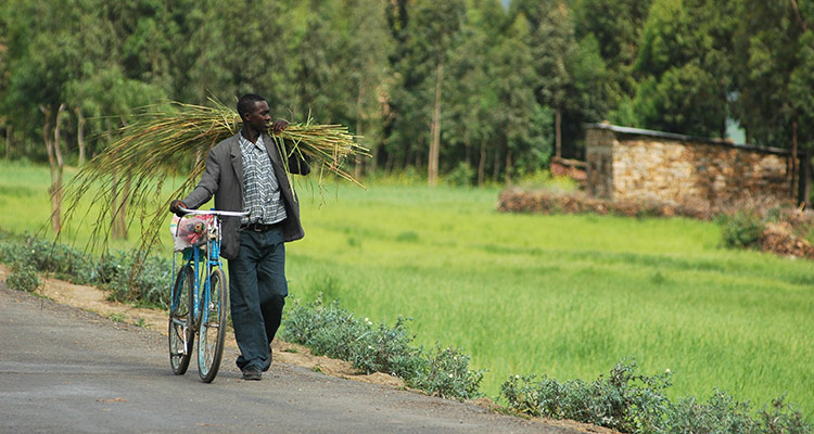 Man walking a bicycle carrying produce, Tigray, Ethiopia