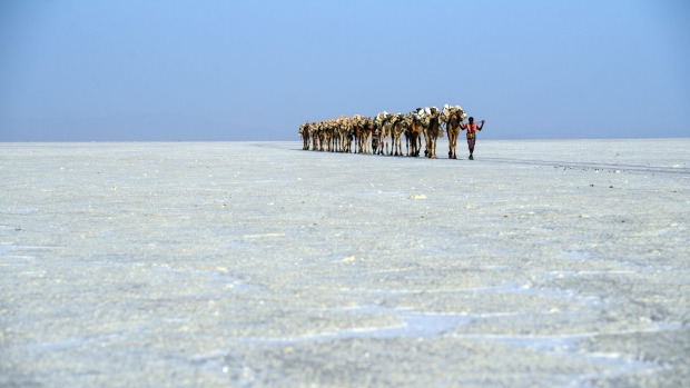 the camel caravans of the salt trade, a timeless image that probably hasn't changed in centuries.