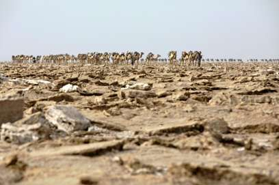 Camel caravans have carried blocks of salt mined by hand from Ethiopia's Danakil Depression to markets since the sixth century
