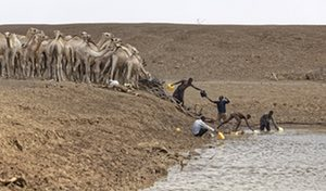 Camel herders collect water for their animals near Moyale on the Ethiopian border.