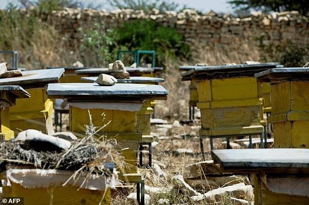 Equipped with the right modern techniques, honey production has the potential to pull thousands of Ethiopian farmers out of poverty, experts say